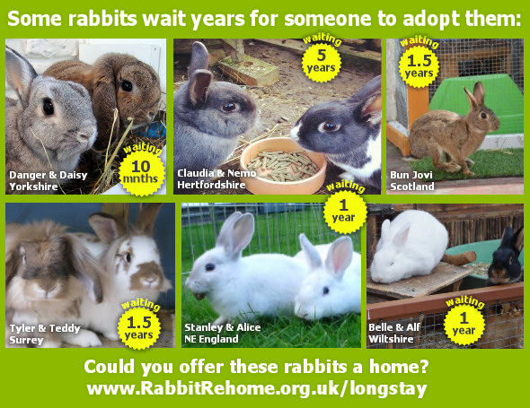 Can you home some of the rabbits that have been waiting a long time for a home?