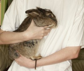 Rabbit Rehome - How to Pick Up Your Rabbit